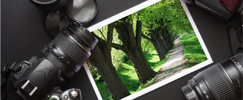 Cámara fotográfica con fotografía de árboles verdes y un camino para peatones
